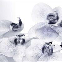 AG Design Papier peint photo Orchids